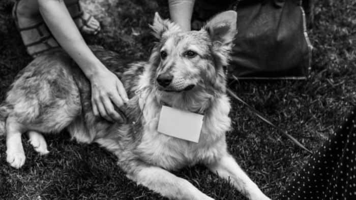 first date ideas for teens - pet shelter