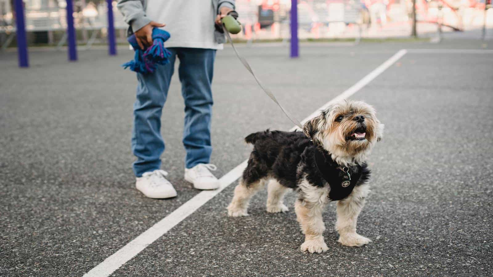 summer job dog walking