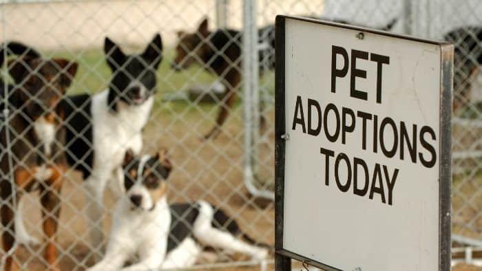 adopt a pet at 18