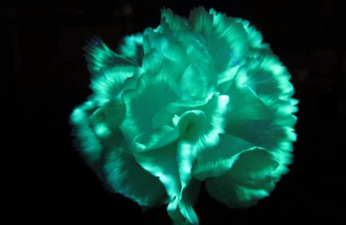 DIY glow flower