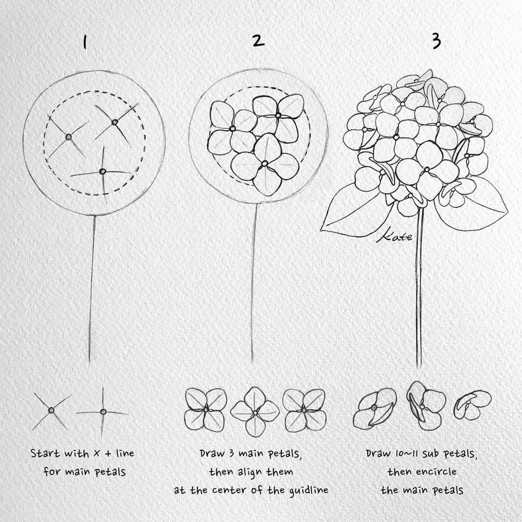 how to draw hydrangeas