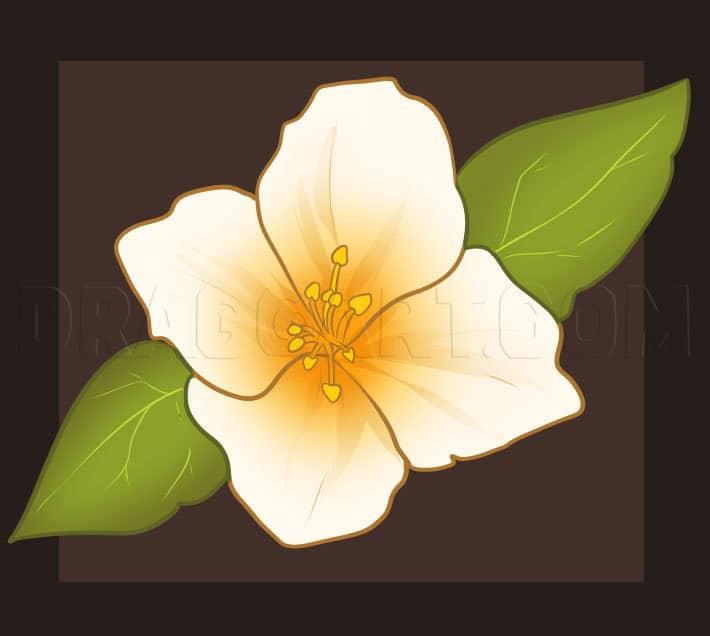 How To Draw A Jasmine Flower