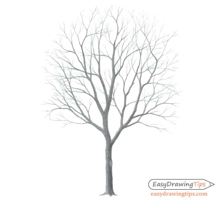 easy things to draw a tree without leaves