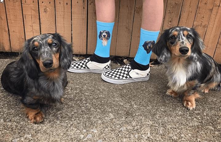 FurbabyPrints custom pet socks